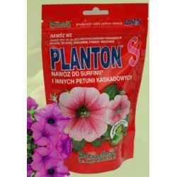 Planton Surfinie