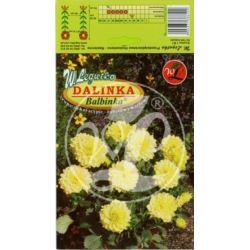 Dalia ogrodowa Dalinka Balbinka