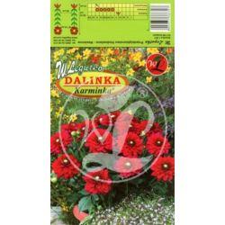 Dalia ogrodowa Dalinka Karminka