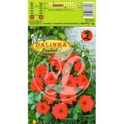Dalia ogrodowa Dalinka Paulinka