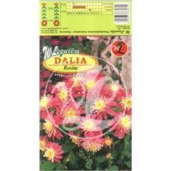 Dalia ogrodowa anemonowa Brio